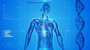 Mensch Skelett